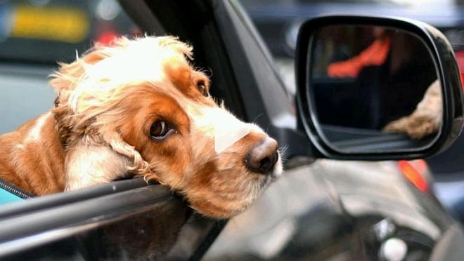 Los perros 'entienden' a los humanos y esto les permite crear un vínculo especial, según estudio